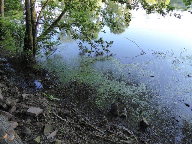 Algae Hereford 3.jpg