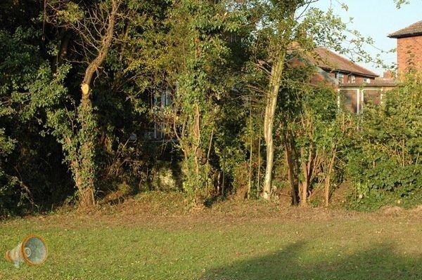 Glastonbury 1.jpg