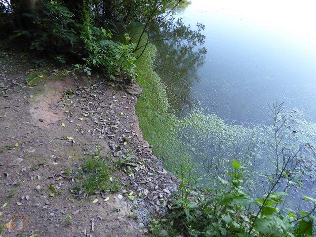Algae Hereford 2.jpg