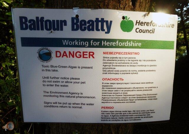 Algae Hereford Sign.jpg