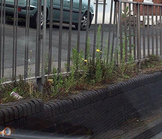 weeds 2.jpg