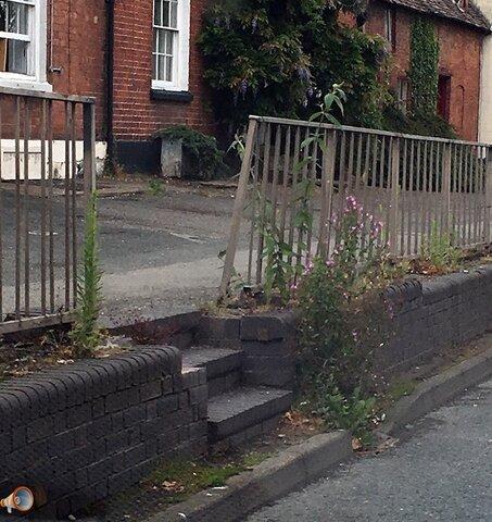 weeds 3.jpg