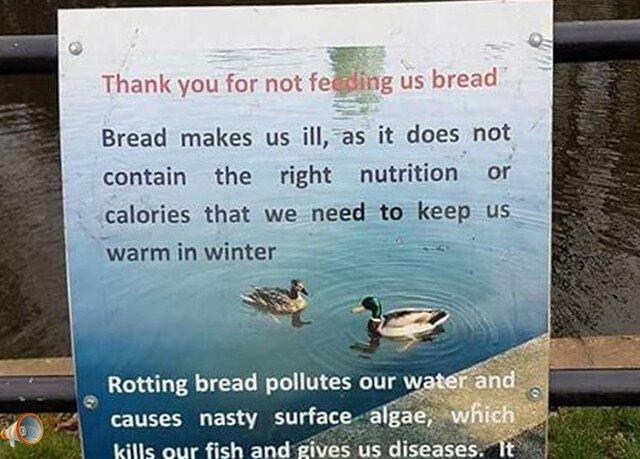 Duck Sign.jpg