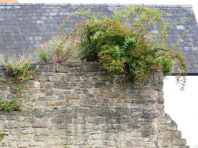 Hereford City Walls Gunners Lane.jpg