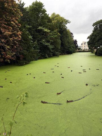 Hereford Duck Pond.jpg
