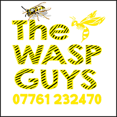 The Wasp Guys